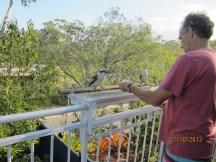 Alan feeding the kookaburras.