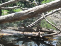 See the water monitor?