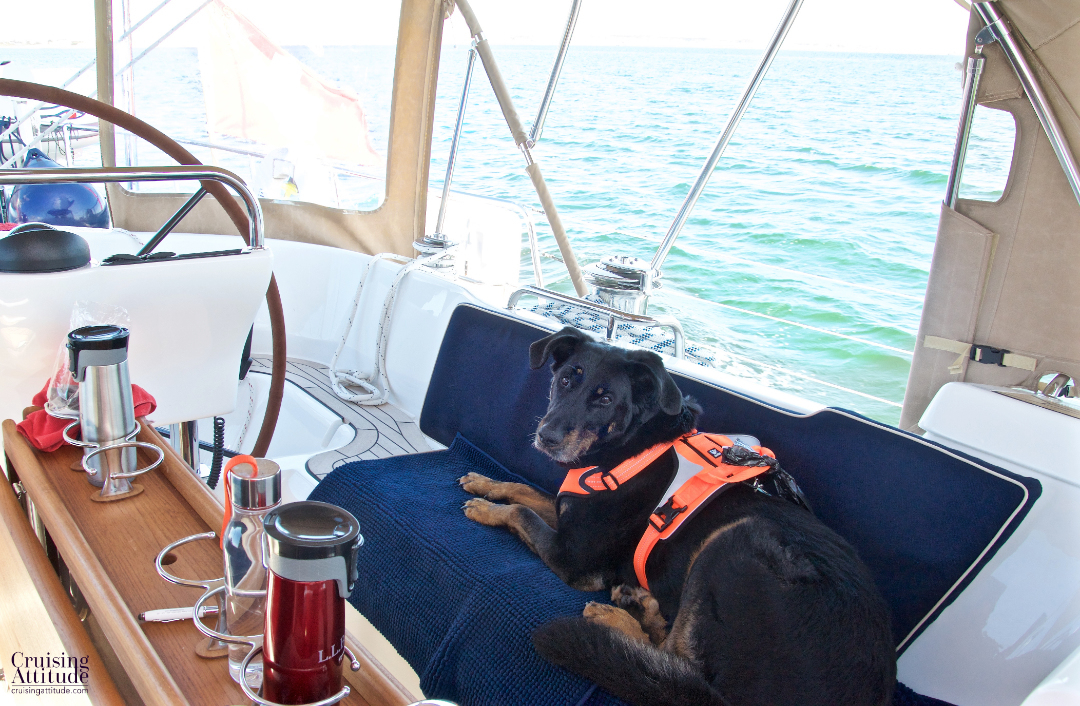 Senna enjoying the sail | Cruising Attitude Sailing Blog - Discovery 55