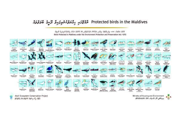 Protected_bird_poster_latest