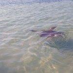 Dorothea swims away (photo by Corning)