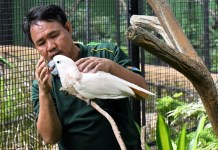 Deaf Bird