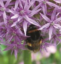 9_Bees hi-res © Harrogate Flower Show