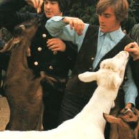 Pet Sounds | To the Dogs or Whomever - A Dog Day Afternoon