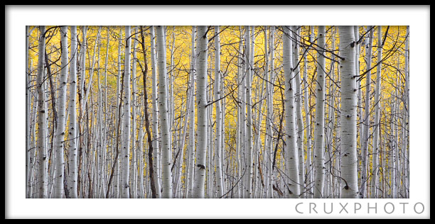 Big Cottonwood Canyon in the Fall.  Copyright Nate Young and Crux Photo.