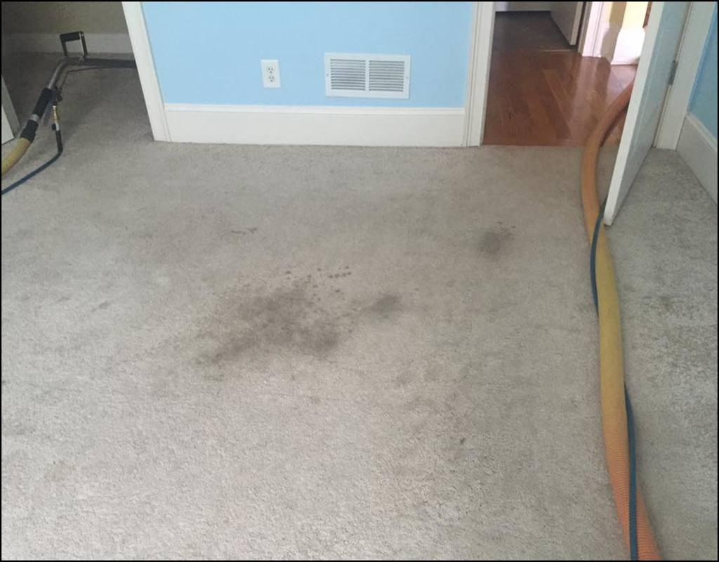 Carpet Cleaning Athens Ga