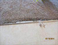 Smartstrand Carpet Reviews Nz
