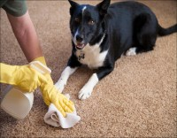 A Review of Neutralize Dog Urine On Carpet | cruzcarpets.com