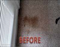 A Secret Weapon for Oxy Clean Carpet Stains | cruzcarpets.com