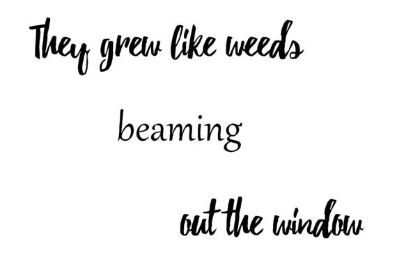 they grew like weeds words