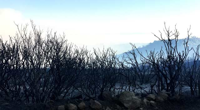 Burned and black bushes were all around