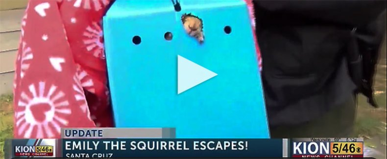 Emily the squirrel in a box