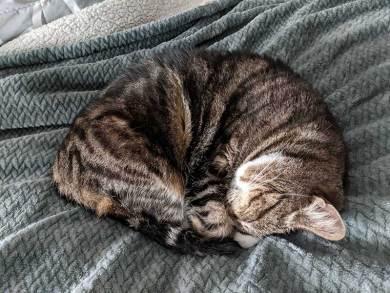 Cam's spherical cat