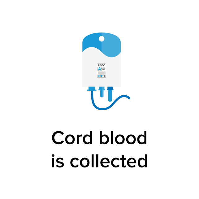 Cord blood is collected