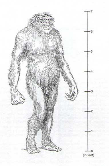 Cryptomundo » John Green on Bigfoot Breasts