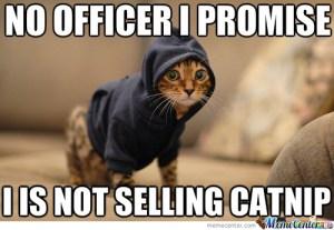 drug dealer kitty