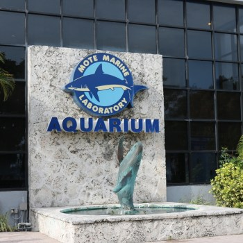 Our Visit to the Mote Marine Laboratory & Aquarium in Sarasota, Florida