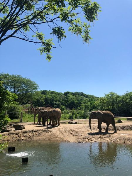 Elephants in the African Safari at Pittsburgh Zoo