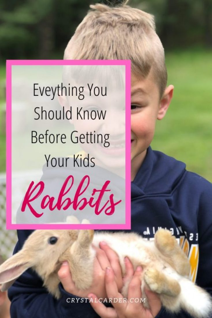Everything-you-shoud.-know-before-getting-rabbits-for-kids