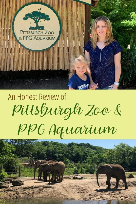 An Honest Review of Pittsburgh Zoo and PPG Aquarium