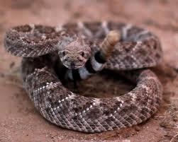 Snake Bite Prevention