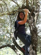 Hanging in a tree over a great precipice.