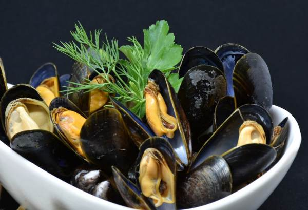 mussels, mussel, common mussel