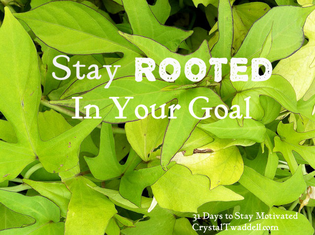 Stay Rooted in Your Goal