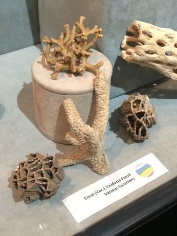 naturalhistmuseum2
