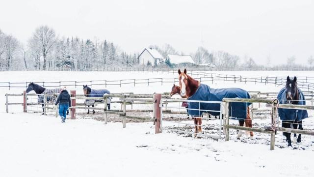 Nina und Spirit im Schnee I