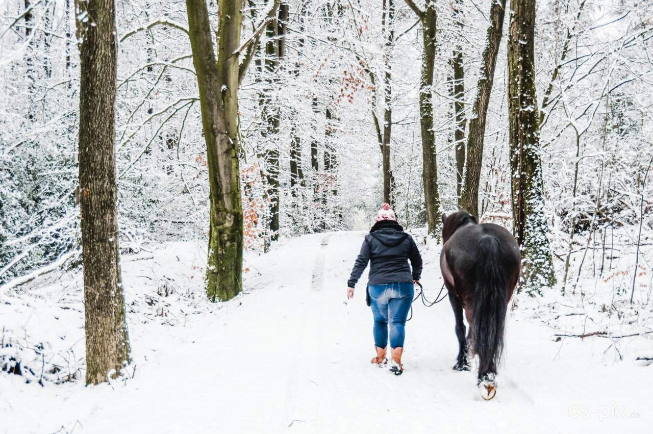 Nina und Spirit im Schnee VIII