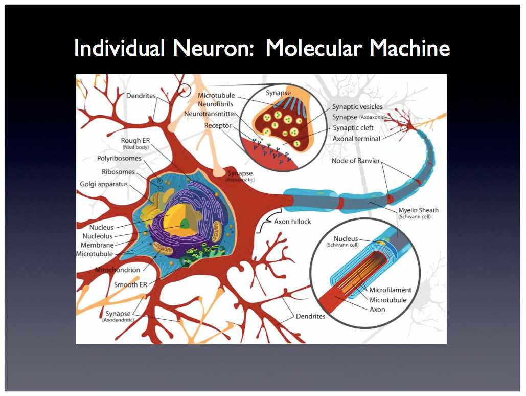 detailed neuron diagram state transition example library management system scalable neuroscience and the brain activity mapping project