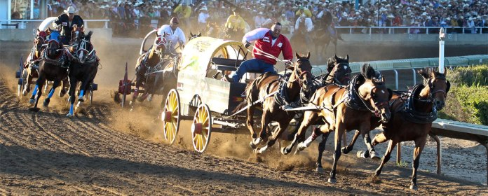 Image result for Calgary Stampede