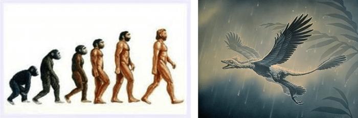 Органикалық әлемдік ғылым, эволюция, Чарльз Дарвин, қызықты, Вавилов, «Берг, шолу, ғылым, ғылым, ғылым және дін», Андрей Лысенко, танымал өкілдік, биологияның әртүрлі теорияларының тарихы және қатынасы