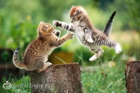 Лучшая порода кошек для детей