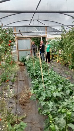 Polytunnel tour with pretty green peppers