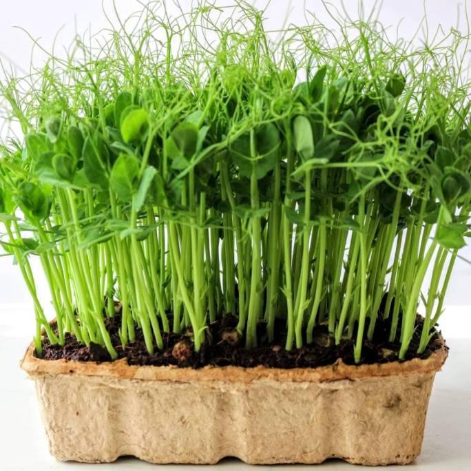 mikrozöldekkel