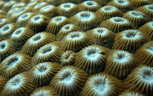 Coral Reef - Source: McMinds, Ryan. Insights into Coral Health Hidden in Reefs' Microbiomes (Image 6). Digital Image. National Science Foundation, November 14, 2016