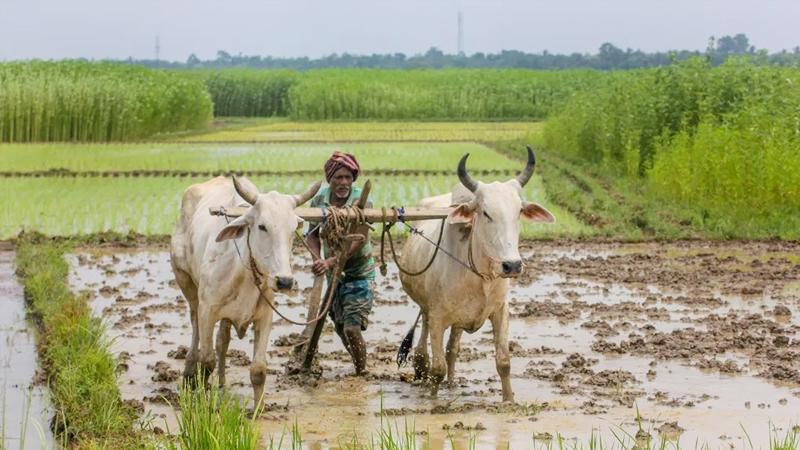 किसान एफपीओ योजना