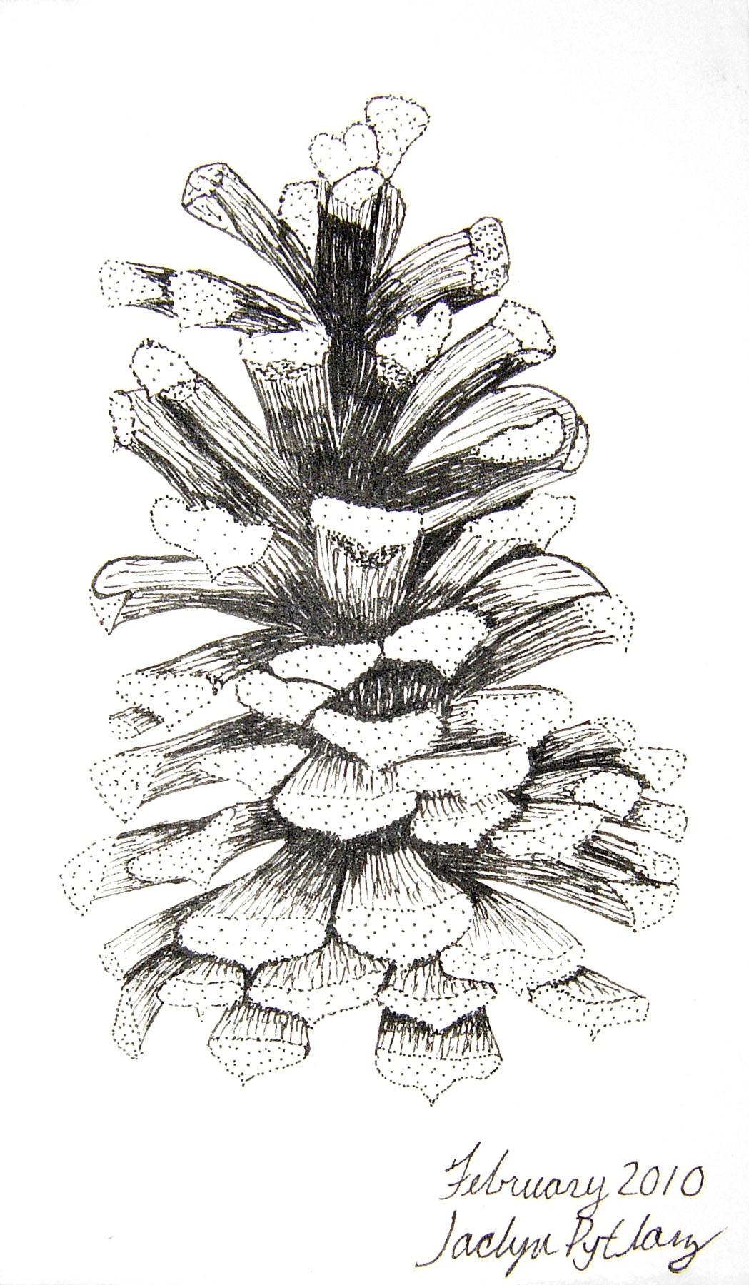 Beautiful Botanical Illustrations Conserve School Blog