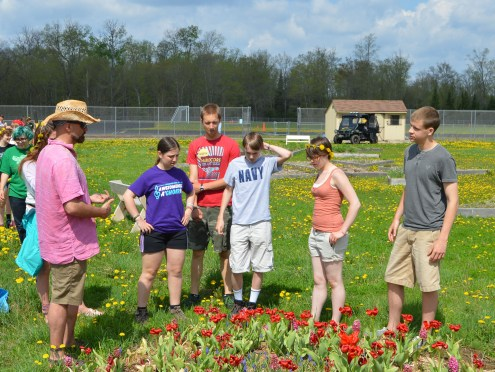 Working with students on a tulip plot