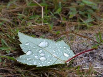 14-09-08 rain droplets by Paulson