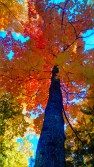 14-09-20 Autumn Color 4