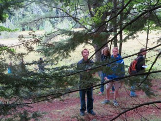 Alec and Elijah checking out a tree