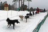 16-02-07 3Bear 10dog 05 Racer 16
