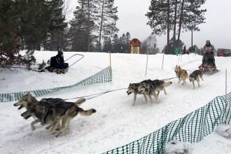 16-02-07 3Bear 6dog 07 Racer 27
