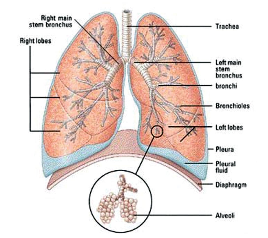 lung alveoli diagram 1999 ford ranger electrical seismically driven characterization of unconventional