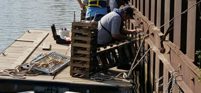 Teams from Cuyahoga River Restoration and Environmental Design Group installed almost 500 habitat structures in the upper three miles of the Cuyahoga River ship channel.