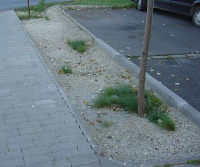 betonhumusz