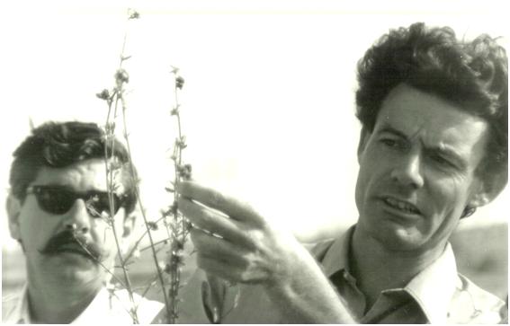 Tony Wapshere examining a specimen of skeleton weed.